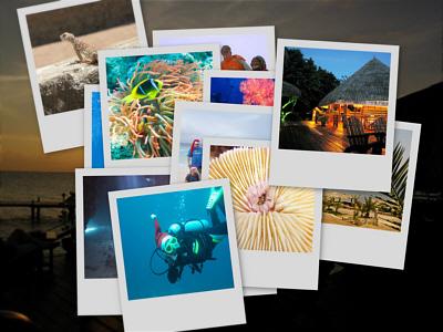 Urlaubsbilder Tauchreisen